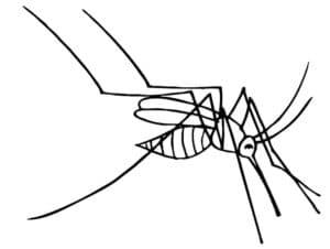 худой комар