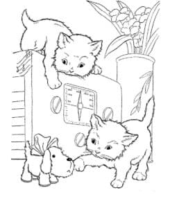 кошки и собачка