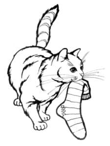 кошка и носок