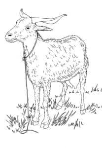 коза на поводке