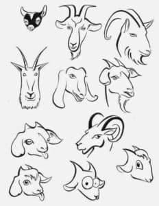 мордочки козы