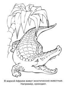крокодил и пальма
