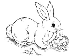 крольчиха ест капусту