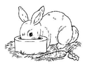 кроль кушает из миски