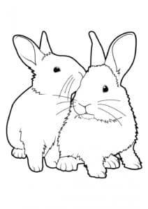 кролик муж и жена