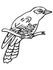 кукушка птица