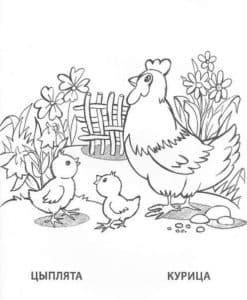 курица цыплята и цветы