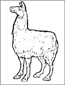 раскраска лама