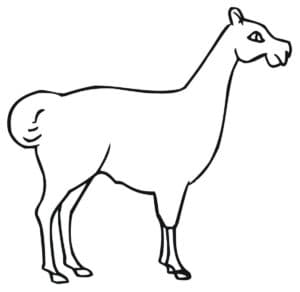 картинка лама