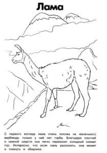 лама смотрит со скалы