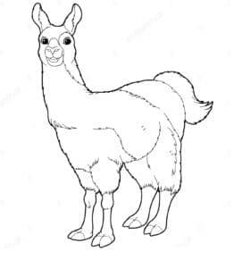 раскраска лама для детей