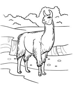 лама на горе