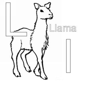 лама красивое животное