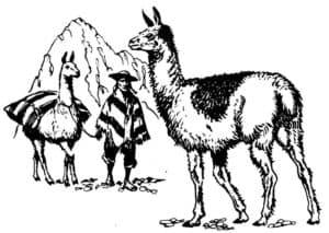 ламы и человек