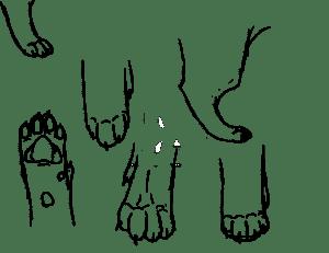 лапы животных