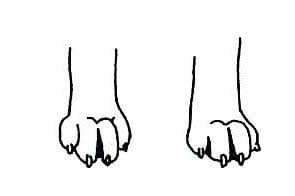 лапы волка