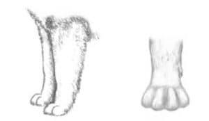 детская раскраска лапы