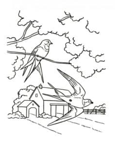 ласточки и дом