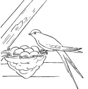 ласточка и яйца в гнезде