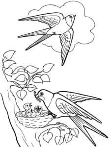 ласточка кормит птенцов