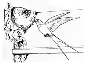 ласточка и гнездо
