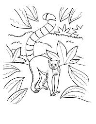 раскраска детская лемур