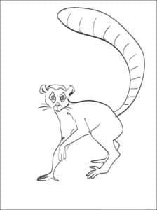 зверек лемур
