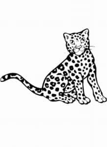 раскраска для детей леопард