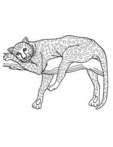 леопард лежит на ветке