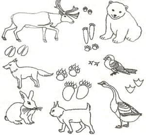 кися гусь и животные