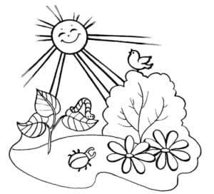 солнышко и природа
