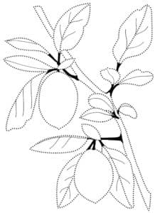 раскраска лимоны