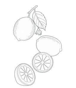 раскраска для детей лимоны