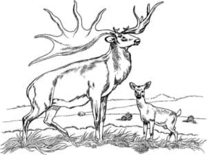 лось и ребенок