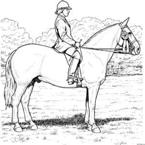 лошадь и наездник