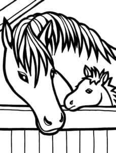 мордочки лошадей