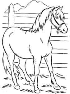 лошадка в загоне