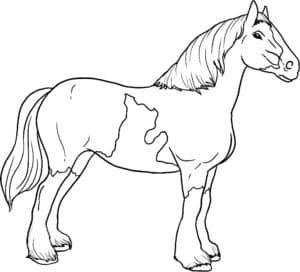 лошадка с красивой гривой