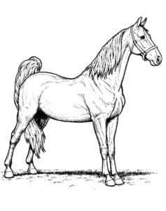 детская раскраска лошадь