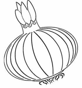 овощ лук