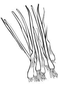 длинный лук