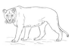 детская раскраска львица