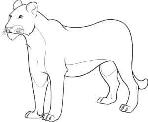раскраска для детей львица