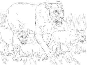 красивая львица и львята