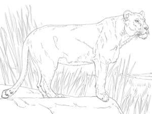 львица в траве