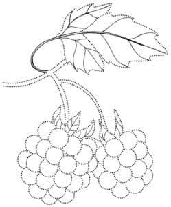 малина детская раскраска с листиком