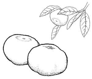 два мандарина