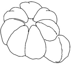дольки мандарина