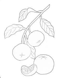 мандарины на ветке раскраска
