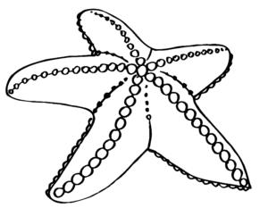раскраска морская звезда